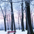Winter park - Stockfoto