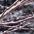 Snow covered branches — Stock Photo