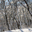 Winter forest — Stock Photo #4825948