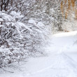 Path in winter forest — Stock Photo #4825953