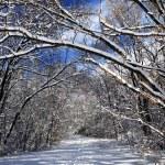 sendero en el bosque de invierno — Foto de Stock