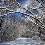 väg i vinter skog — Stockfoto