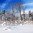 Winter forest — Stock Photo #4825966