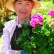 Senior woman gardening — Stock Photo #4826069