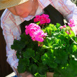 Senior woman gardening - Stockfoto