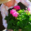 Senior woman gardening - Photo