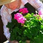 Senior woman gardening — Stock Photo #4826071