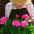 Senior woman gardening — Stock Photo #4826077