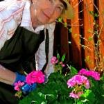 Senior woman gardening — Stock Photo
