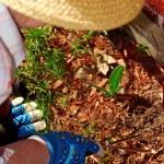 Senior woman gardening — Stock Photo #4826080