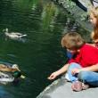 Children feeding ducks — Stock Photo