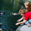 Children feeding ducks - Stock Photo
