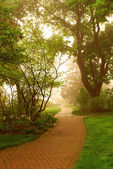 Foggy park — Stockfoto