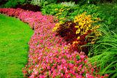 花园 — 图库照片
