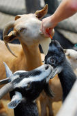 Petting zoo — Stock Photo