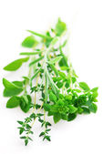 Assorted herbs — Foto Stock