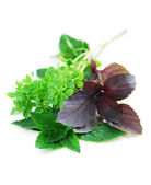 Assorted basil herbs — Stock Photo