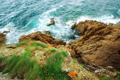 Cliffs at the ocean — Stock Photo