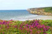 Atlantic coast in Europe — Stock Photo