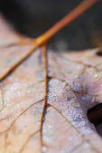 Dewy leaf — Stock Photo
