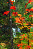 Fall forest and river — Stock Photo