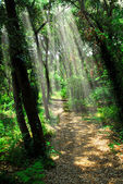 Path in sunlit forest — Stock Photo