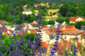 Rooftops in Sarlat, France — Stock Photo