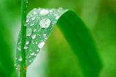 Raindrops on grass — Stock Photo