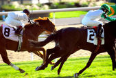 Horses racing — Stock Photo