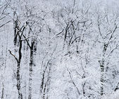 Winter forest — Fotografia Stock