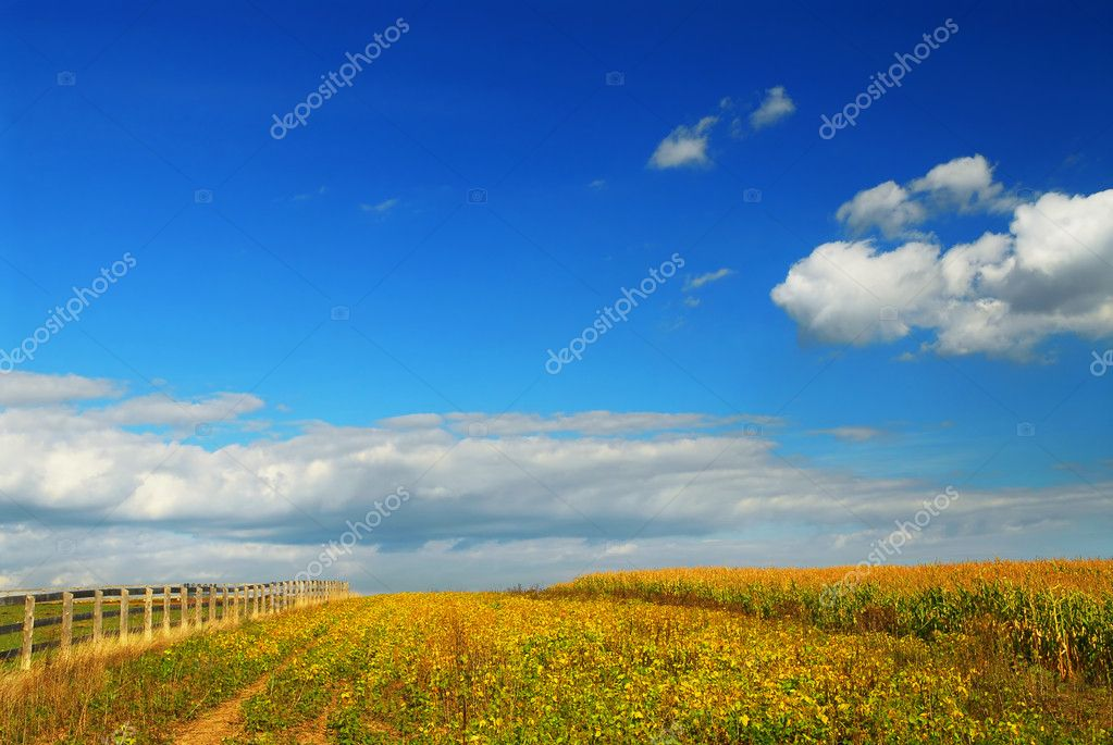 Farm fields on soybeans and corn under blue sky — Stock Photo #4824329