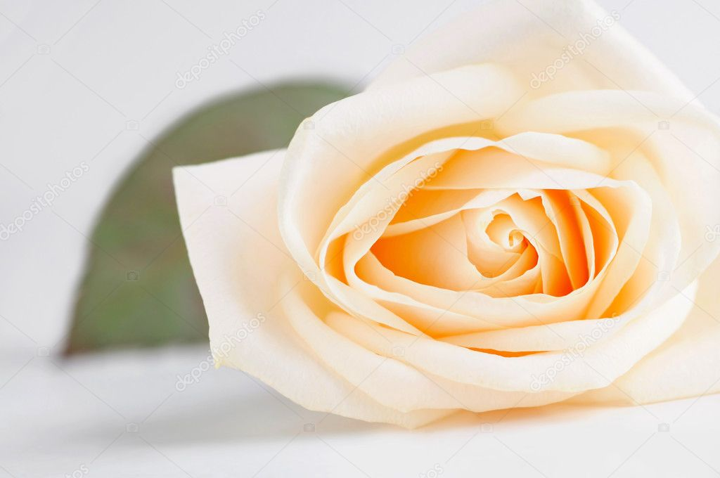 Delicate high key beige rose macro with a leaf — Stock Photo #4825010