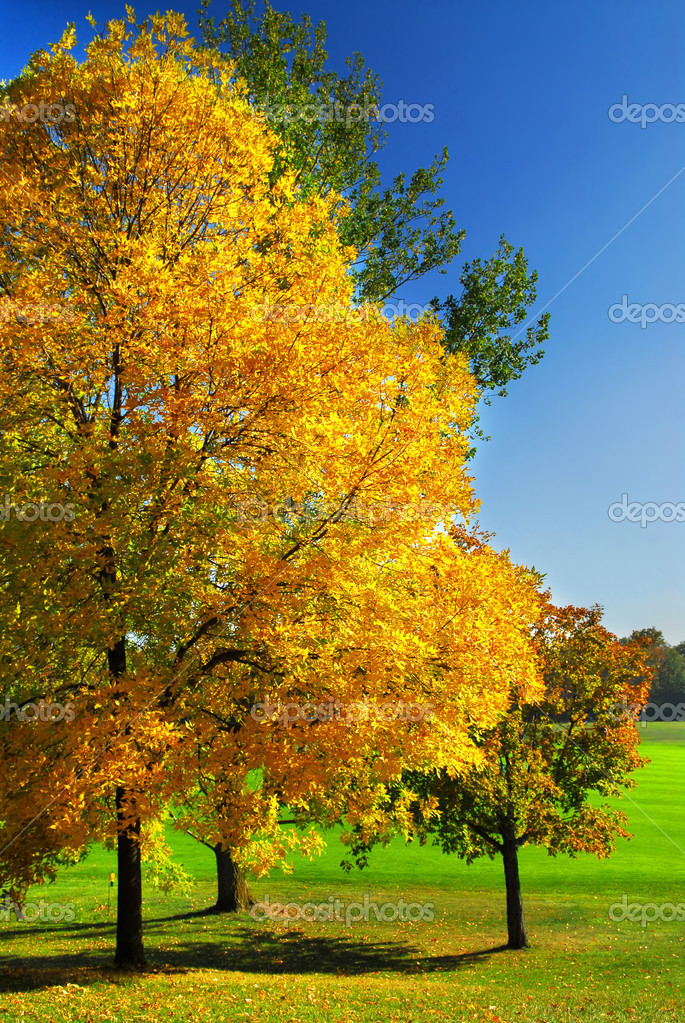Group of colorful trees in autumn park  — Stock Photo #4825363