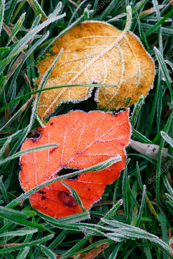 Frosty colorful fallen leaves lying on frozen grass on a cold fall morning — Stock Photo #4825536