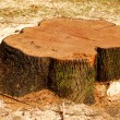 Tree stump - Stock Photo