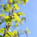 Spring — Stock Photo #4947513