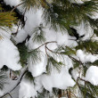 Snowy pine — Stock Photo