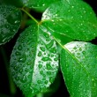 Wet green leaf — Foto de Stock