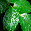 Wet green leaf — Stockfoto