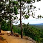 Pines kayalıklarla iz — Stok fotoğraf