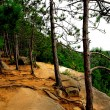 图库照片: Pines on cliffs