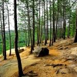 Pines cliffs trail — Stock Photo