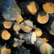 Stock Photo: Wood logs