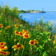 Stock Photo: Wild flowers on seashore