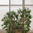 Stock Photo: House plant