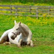 White horse — Stock Photo #4948052