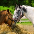 Horses at the ranch — Stock Photo #4948057