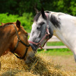 Horses at the ranch - Stock Photo