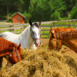 Horses at the ranch — Stock Photo #4948062