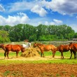 Horses at the ranch — Stock Photo